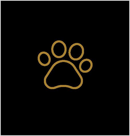 MAGES Design l Fotografie l Tiere